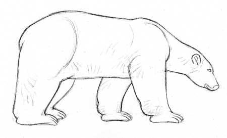 Dessiner les ours polaires dessiner la vie - Dessin ours facile ...