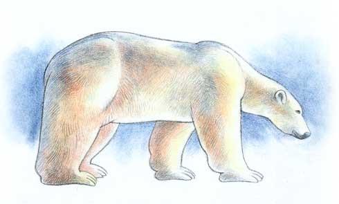 Dibujar los osos polares  Dessiner la vie