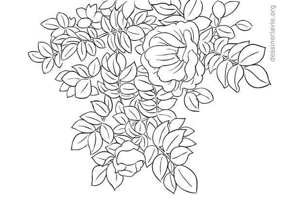 branche-fleurie-dessin