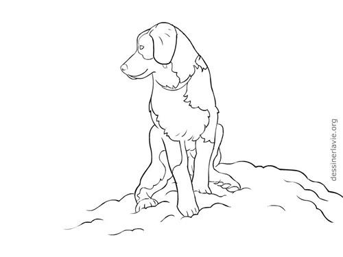 Chien assis copier dessiner la vie for Cout d un chien assis