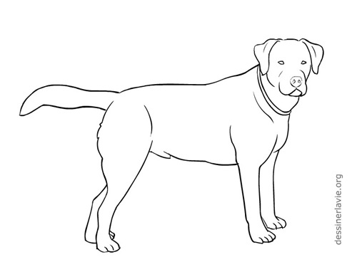 tracer chiens 0002 - Chien Facile A Dessiner